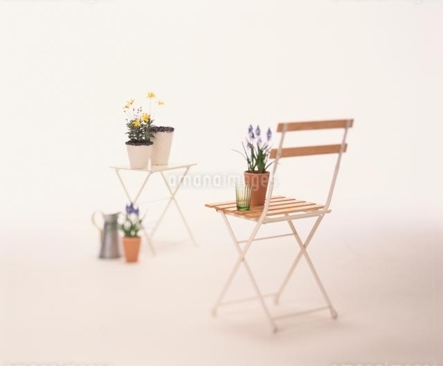 植木鉢を置いた椅子とテーブルと水差しの写真素材 [FYI01596492]