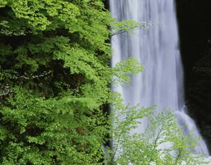 新緑と滝 梓川支流の写真素材 [FYI01596611]