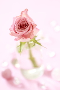 ガラスのびんに挿したバラの花の写真素材 [FYI01597127]