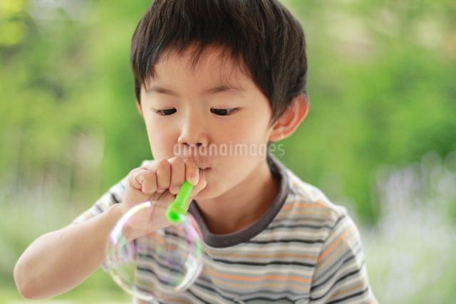 シャボン玉を吹く男の子の写真素材 [FYI01597595]