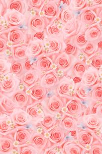 一面に敷詰められたピンクのバラと小花の写真素材 [FYI01597687]