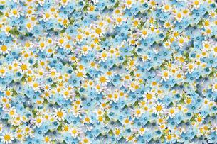 一面に敷詰められた小花の写真素材 [FYI01597865]
