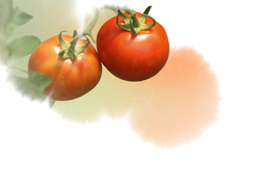 トマトのイラスト素材 [FYI01598002]