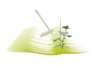 キュウリの苗と鍬のある畑のイラスト素材 [FYI01598063]