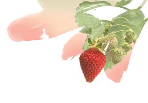 イチゴのイラスト素材 [FYI01598184]