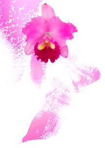 蘭の花と抽象画の組み合わせのイラスト素材 [FYI01598417]