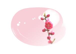 春の光と桃の花のイラスト素材 [FYI01598658]
