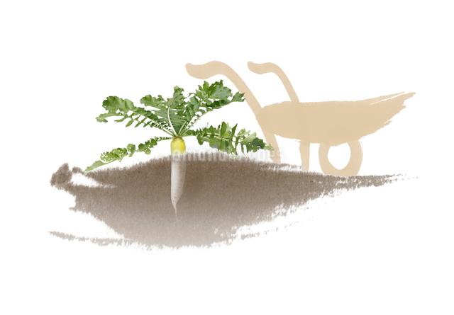 畑の大根と一輪車のイラスト素材 [FYI01598759]