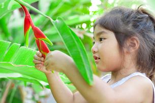 花を見る女の子の写真素材 [FYI01598771]