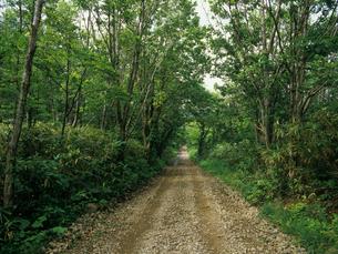 林道の写真素材 [FYI01598974]
