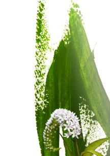 岡虎の尾と抽象画の組み合わせのイラスト素材 [FYI01599030]