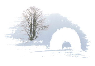 冬木立とかまくらのイラスト素材 [FYI01599055]