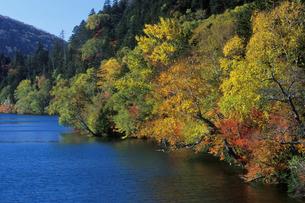 紅葉の然別湖の写真素材 [FYI01599237]
