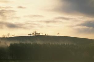 朝の空と木の写真素材 [FYI01599254]