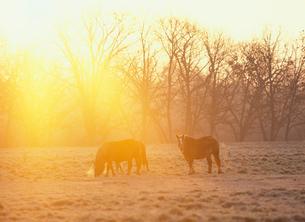 朝の牧場と馬の写真素材 [FYI01599435]