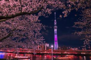 ライトアップのスカイツリーと桜と屋形船の写真素材 [FYI01599621]
