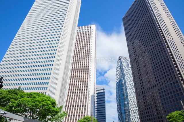 新緑の木立と高層ビル群,新宿副都心の写真素材 [FYI01599652]