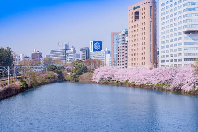 外濠の桜と町並みの写真素材 [FYI01599764]
