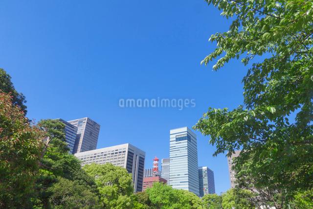 新緑の丸の内ビル群の写真素材 [FYI01599780]