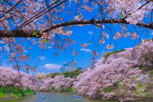 散る花びらと千鳥ヶ淵の写真素材 [FYI01599817]