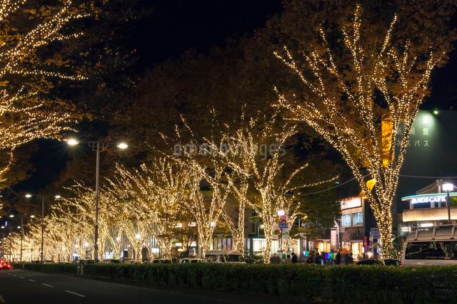 表参道イルミネーション,夜景の写真素材 [FYI01599901]