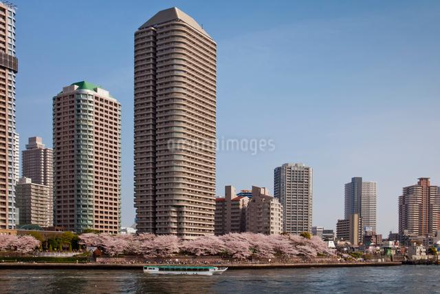 桜と高層マンション群と遊覧船の写真素材 [FYI01599911]