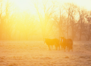 朝の牧場と馬の写真素材 [FYI01599918]