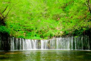 白糸の滝の写真素材 [FYI01599938]