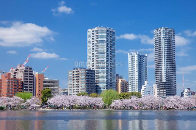 桜並木とビル群,上野公園の写真素材 [FYI01600080]