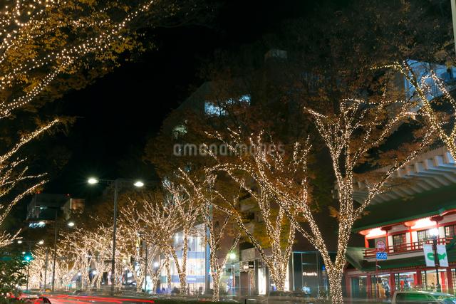 表参道イルミネーション,夜景の写真素材 [FYI01600131]