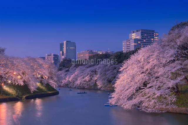 ライトアップの桜と千鳥ヶ淵の写真素材 [FYI01600135]