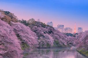 桜咲く千鳥ヶ淵の夕景の写真素材 [FYI01600136]