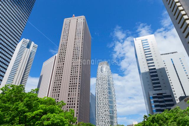 新緑の木立と高層ビル群,新宿副都心の写真素材 [FYI01600169]
