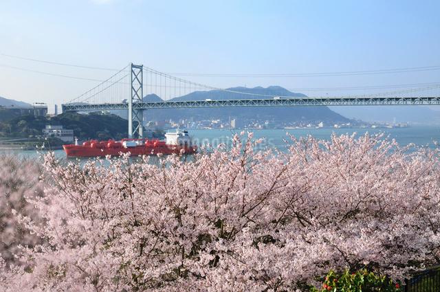 桜咲く火の山公園より望む関門橋の写真素材 [FYI01600212]