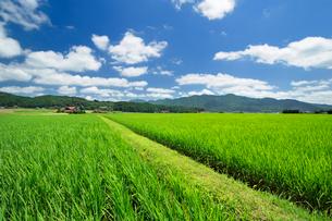 夏の田園風景の写真素材 [FYI01600326]