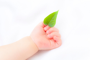 葉を持つ赤ちゃんの手の写真素材 [FYI01600360]