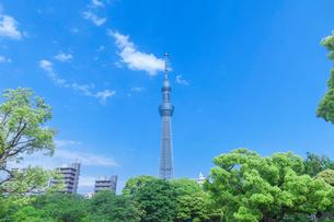 新緑の木立と東京スカイツリーの写真素材 [FYI01600365]
