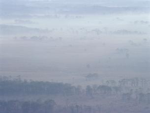 朝霧の釧路湿原の写真素材 [FYI01600410]