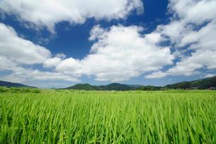 夏の田園風景の写真素材 [FYI01600679]