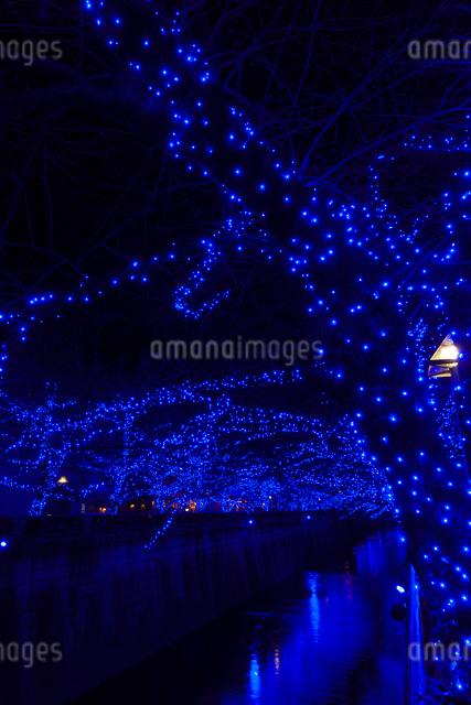目黒川イルミネーションの写真素材 [FYI01600828]