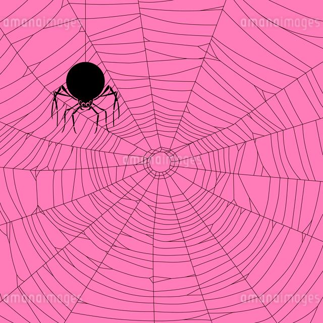 シルエットの蜘蛛と蜘蛛の巣の写真素材 [FYI01600873]