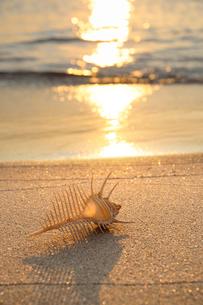 夕焼けの波打ち際 砂浜とホネ貝の写真素材 [FYI01600877]
