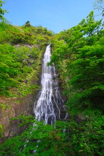 天滝の写真素材 [FYI01600918]