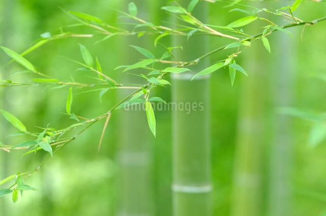 竹林の写真素材 [FYI01600952]
