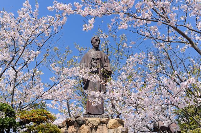 桜咲く日和山公園の高杉晋作像の写真素材 [FYI01601179]