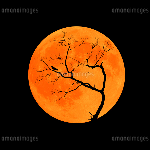 月にシルエットの枯れ木とカラスのハロウィンイメージのイラスト素材 [FYI01601214]