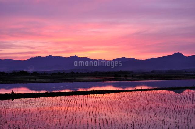 夕焼けに染まる水田の写真素材 [FYI01601305]