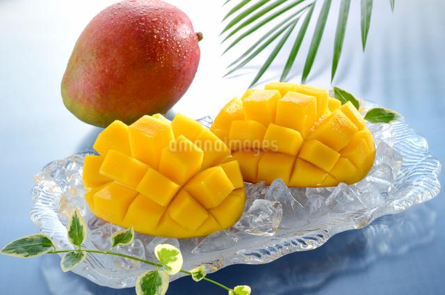 カットされたマンゴーと1個のマンゴーの写真素材 [FYI01601378]