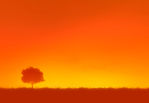 夕焼けと一本の木のシルエットの写真素材 [FYI01601459]