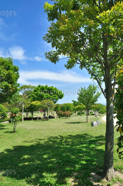 初夏の自然公園の写真素材 [FYI01601500]